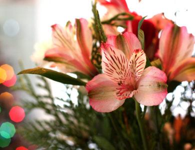 regalare fiori per compleanno