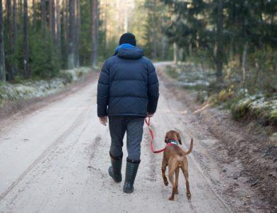 cosa fare quando si parte con il cane